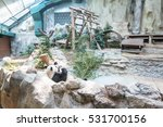the chinese panda in the... | Shutterstock . vector #531700156
