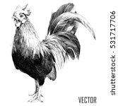 rooster sketch   Shutterstock .eps vector #531717706