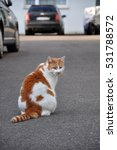 Stock photo portrait of red white cat sitting on the pavement in the parking 531788572