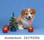 Cute Puppy Corgi On A Blue...