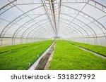 agriculture   nurturing baby... | Shutterstock . vector #531827992