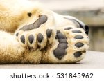 Paws Of Polar Bear. Ursus...