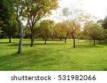 green grass field in big city...   Shutterstock . vector #531982066