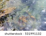 Small photo of Shoal of sergeant major fishes (Abudefduf saxatilis) near the water surface from above
