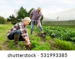 farming  gardening  agriculture ... | Shutterstock . vector #531993385