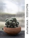 Small photo of The Lonely Cactus, MISS YOU CACTUS FEELING ALONE ALONE