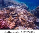 free life deep sea and coral... | Shutterstock . vector #532022335