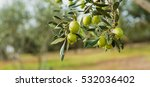 Stock photo green olives tree 532036402