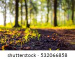 Stock photo close up spring nature landscape ground forest on sunset summer background blurred nature 532066858