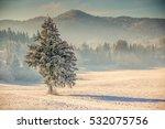 Single Fir Tree On The Frozen...