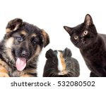 Stock photo set pet peeping on a white background 532080502
