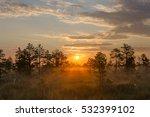 Misty Bog Landscape In The...