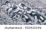 Cozy Ducklings B W