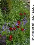 Small photo of Colourful mixed planted flower border including Ladybird Poppies, Allium and grasses