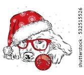 French Bulldog In Winter Hat....