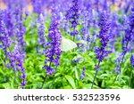 white butterfly on wild flower  ... | Shutterstock . vector #532523596