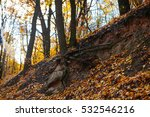 red and colorful autumn colors... | Shutterstock . vector #532546216