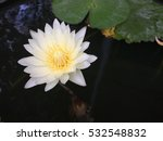 A Lotus Flower Blooming In The...