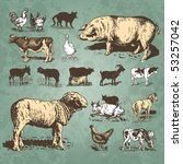 vintage farm animals drawings... | Shutterstock .eps vector #53257042