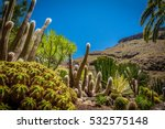 large cactuses photographed in... | Shutterstock . vector #532575148