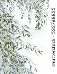 green bamboo leaves in snow | Shutterstock . vector #532768825