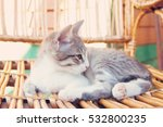 small kitten lying on the... | Shutterstock . vector #532800235