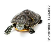 An Image Of Turtle Isolated On...