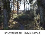 trees and forests. | Shutterstock . vector #532843915