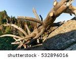 Fallen Dead Tree On The Boulde...