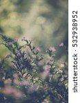 Small photo of littel Elfin herb vintage flower look beautiful