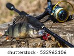 Fish With A Fishing Rod