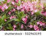 flowers | Shutterstock . vector #532963195