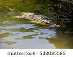 water bodies on the crocodile... | Shutterstock . vector #533035582