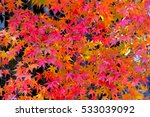Japanese Maple Leaves Background