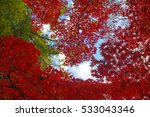 autumn color in japan | Shutterstock . vector #533043346