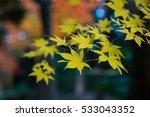 autumn color in japan | Shutterstock . vector #533043352