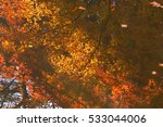 maple reflected on the surface... | Shutterstock . vector #533044006