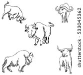 bulls sketch pencil drawing