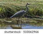 heron in sanssouci | Shutterstock . vector #533062966