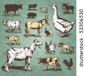 vintage farm animals drawings... | Shutterstock .eps vector #53306530