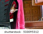Stock photo brown cat peeking from a gray chair covered by pink towel 533095312