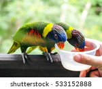 Feeding The Colorful Birds At...