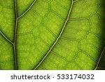 leaves macros | Shutterstock . vector #533174032