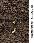 new plant on the soil | Shutterstock . vector #53322250