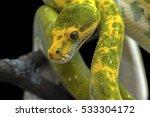reptile black background snake... | Shutterstock . vector #533304172