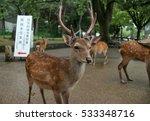 Japan Kyoto Nara Park Deer And...