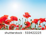 Red Poppy Flowers In The...
