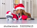 Stock photo wearing a christmas hat of dogs and cats 533539615