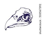 Birds Skull Line Art Hand Draw...