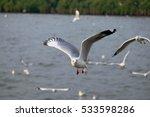 seagulls   Shutterstock . vector #533598286